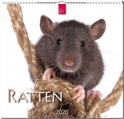 Ratten von Redaktion Verlagshaus Würzburg,  Bildagentur