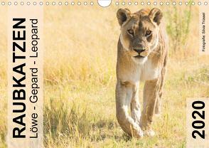 Raubkatzen – Löwe, Gepard, Leopard (Wandkalender 2020 DIN A4 quer) von Trüssel,  Silvia