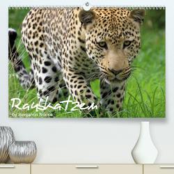 Raubkatzen (Premium, hochwertiger DIN A2 Wandkalender 2020, Kunstdruck in Hochglanz) von Nocke,  Benjamin