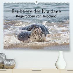 Raubtier der Nordsee – Kegelrobben vor Helgoland (Premium, hochwertiger DIN A2 Wandkalender 2020, Kunstdruck in Hochglanz) von Quentin,  Udo