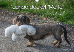Rauhaardackel Motte & Friends (Wandkalender 2019 DIN A3 quer) von Kuhr,  Susann