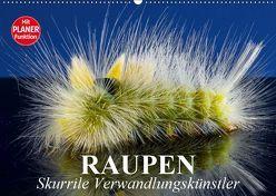 Raupen. Skurrile Verwandlungskünstler (Wandkalender 2019 DIN A2 quer) von Stanzer,  Elisabeth