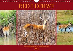 RED LECHWE Rote Sumpfantilope im Südlichen Afrika (Wandkalender 2019 DIN A4 quer) von Fraatz,  Barbara