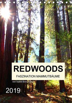 Redwoods – Faszination Mammutbäume (Tischkalender 2019 DIN A5 hoch) von Bürschgens,  Isabel