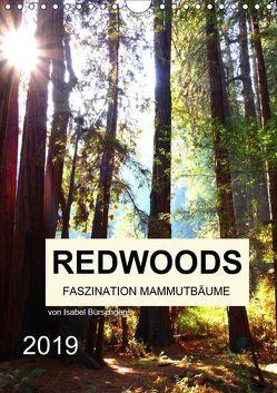 Redwoods – Faszination Mammutbäume (Wandkalender 2019 DIN A4 hoch) von Bürschgens,  Isabel