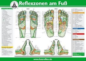 Reflexzonen am Fuß (A4) von Marquardt,  Hanne