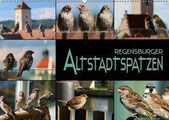 Regensburger Altstadtspatzen (Wandkalender 2019 DIN A2 quer) von Bleicher,  Renate