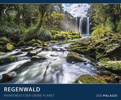 Regenwald 2020 von PALAZZI