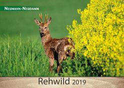 Rehwild 2019