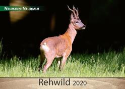 Rehwild 2020