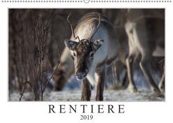 Rentiere (Wandkalender 2019 DIN A2 quer) von Worm,  Sebastian