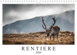 Rentiere (Wandkalender 2020 DIN A4 quer) von Worm,  Sebastian