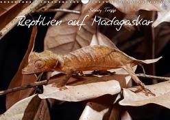 Reptilien auf Madagaskar (Wandkalender 2019 DIN A3 quer) von Trapp,  Benny