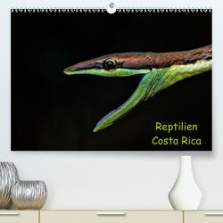 Reptilien Costa Rica (Premium, hochwertiger DIN A2 Wandkalender 2021, Kunstdruck in Hochglanz) von Dummermuth,  Stefan
