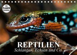 Reptilien. Schlangen, Echsen und Co. (Tischkalender 2019 DIN A5 quer) von Stanzer,  Elisabeth
