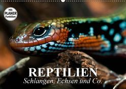 Reptilien. Schlangen, Echsen und Co. (Wandkalender 2019 DIN A2 quer) von Stanzer,  Elisabeth