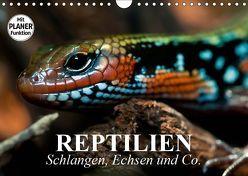 Reptilien. Schlangen, Echsen und Co. (Wandkalender 2019 DIN A4 quer) von Stanzer,  Elisabeth