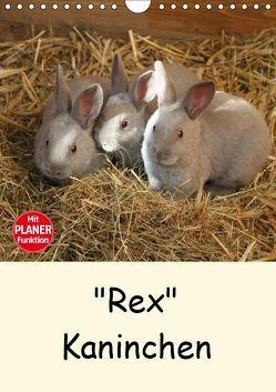 """""""Rex"""" Kaninchen (Wandkalender 2019 DIN A4 hoch) von Bagunk,  Anja"""