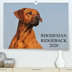 Rhodesian Ridgeback 2020 (Premium, hochwertiger DIN A2 Wandkalender 2020, Kunstdruck in Hochglanz) von Starick,  Sigrid