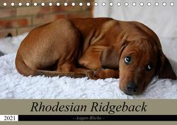 Rhodesian Ridgeback Augen-Blicke (Tischkalender 2021 DIN A5 quer) von Behrens,  Dagmar