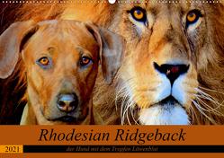 Rhodesian Ridgeback der Hund mit dem Tropfen Löwenblut (Wandkalender 2021 DIN A2 quer) von Behrens,  Dagmar