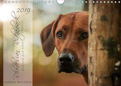 Rhodesian Ridgeback – Herzen auf vier Pfoten (Wandkalender 2019 DIN A4 quer) von Mischnik,  Sabrina