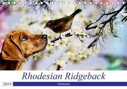 Rhodesian Ridgeback – Moments (Tischkalender 2019 DIN A5 quer) von Behrens,  Dagmar