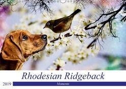 Rhodesian Ridgeback – Moments (Wandkalender 2019 DIN A3 quer) von Behrens,  Dagmar