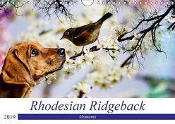 Rhodesian Ridgeback – Moments (Wandkalender 2019 DIN A4 quer) von Behrens,  Dagmar