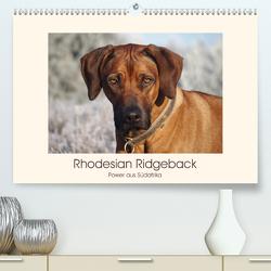Rhodesian Ridgeback Power aus Südafrika (Premium, hochwertiger DIN A2 Wandkalender 2020, Kunstdruck in Hochglanz) von Bodsch,  Birgit