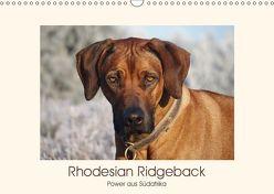 Rhodesian Ridgeback Power aus Südafrika (Wandkalender 2019 DIN A3 quer) von Bodsch,  Birgit