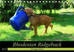 Rhodesian Ridgeback – Schnappschüsse – (Tischkalender 2019 DIN A5 quer) von Behrens,  Dagmar