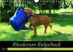 Rhodesian Ridgeback – Schnappschüsse – (Wandkalender 2019 DIN A4 quer) von Behrens,  Dagmar
