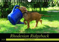 Rhodesian Ridgeback – Schnappschüsse – (Wandkalender 2020 DIN A4 quer) von Behrens,  Dagmar