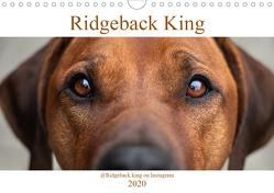 Ridgeback King (Wandkalender 2020 DIN A4 quer) von Sölter,  Julia