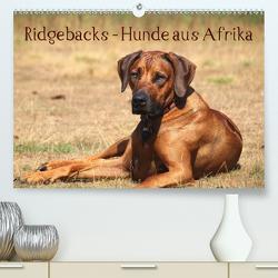 Ridgebacks – Hunde aus Afrika (Premium, hochwertiger DIN A2 Wandkalender 2020, Kunstdruck in Hochglanz) von Bodsch,  Birgit