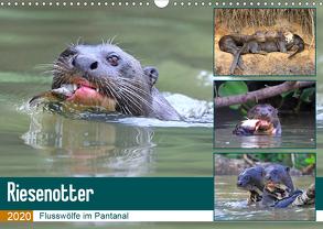 Riesenotter – Flusswölfe im Pantanal (Wandkalender 2020 DIN A3 quer) von und Yvonne Herzog,  Michael