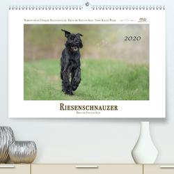 Riesenschnauzer – Riesen mit Herz und Seele (Premium, hochwertiger DIN A2 Wandkalender 2020, Kunstdruck in Hochglanz) von Wrede,  Martina