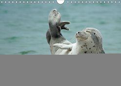 Robben an der Nordsee (Wandkalender 2019 DIN A4 quer) von Fornal,  Martina