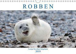 Robben – Lustige Bewohner Helgolands (Wandkalender 2019 DIN A4 quer) von Orth,  Egid