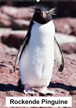 Rockende Pinguine (Wandkalender 2021 DIN A2 hoch) von Reuke,  Sabine