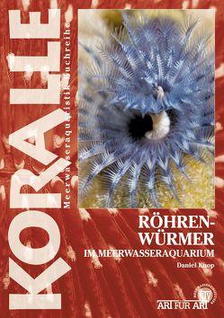 Röhrenwürmer im Meerwasseraquarium von Knop,  Daniel