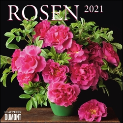 Rosen 2021 ‒ Broschürenkalender ‒ Format 30 x 30 cm von Perry,  Clay