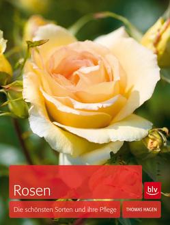 Rosen von Hagen,  Thomas