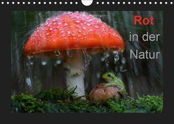 Rot in der Natur (Wandkalender 2019 DIN A4 quer) von Bachmeier,  Günter