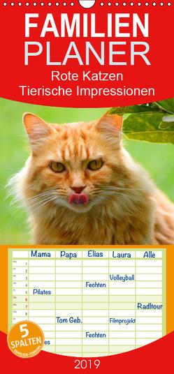 Rote Katzen 2019. Tierische Impressionen – Familienplaner hoch (Wandkalender 2019 , 21 cm x 45 cm, hoch) von Lehmann (Hrsg.),  Steffani