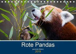 Rote Pandas – geschickte Kletterer (Tischkalender 2019 DIN A5 quer) von the Snow Leopard,  Cloudtail