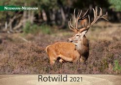Rotwild 2021