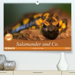 Salamander und Co. (Premium, hochwertiger DIN A2 Wandkalender 2020, Kunstdruck in Hochglanz) von Di Chito,  Ursula