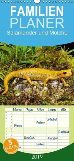 Salamander und Molche – Familienplaner hoch (Wandkalender 2019 , 21 cm x 45 cm, hoch) von Trapp,  Benny